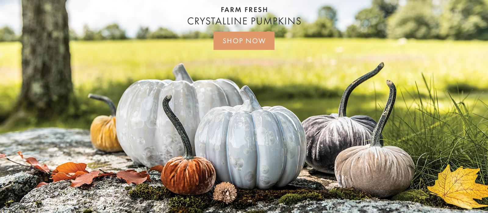 FARM FRESH CRYSTALLINE PUMPKINS — SHOP NOW >