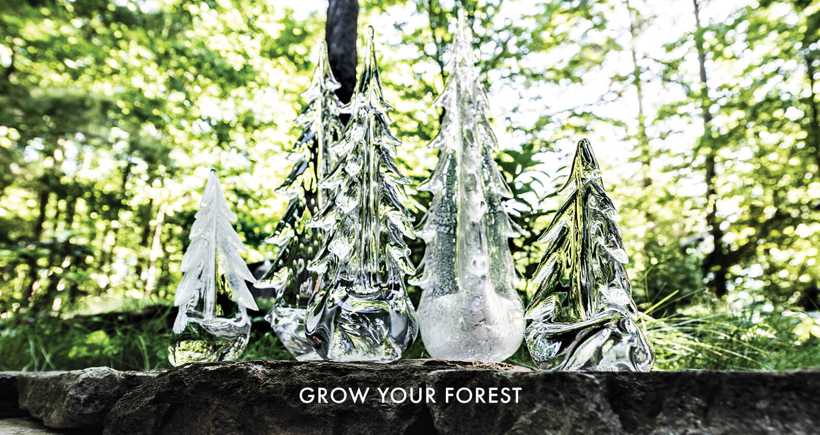 Assorted Evergreen Trees Header Image