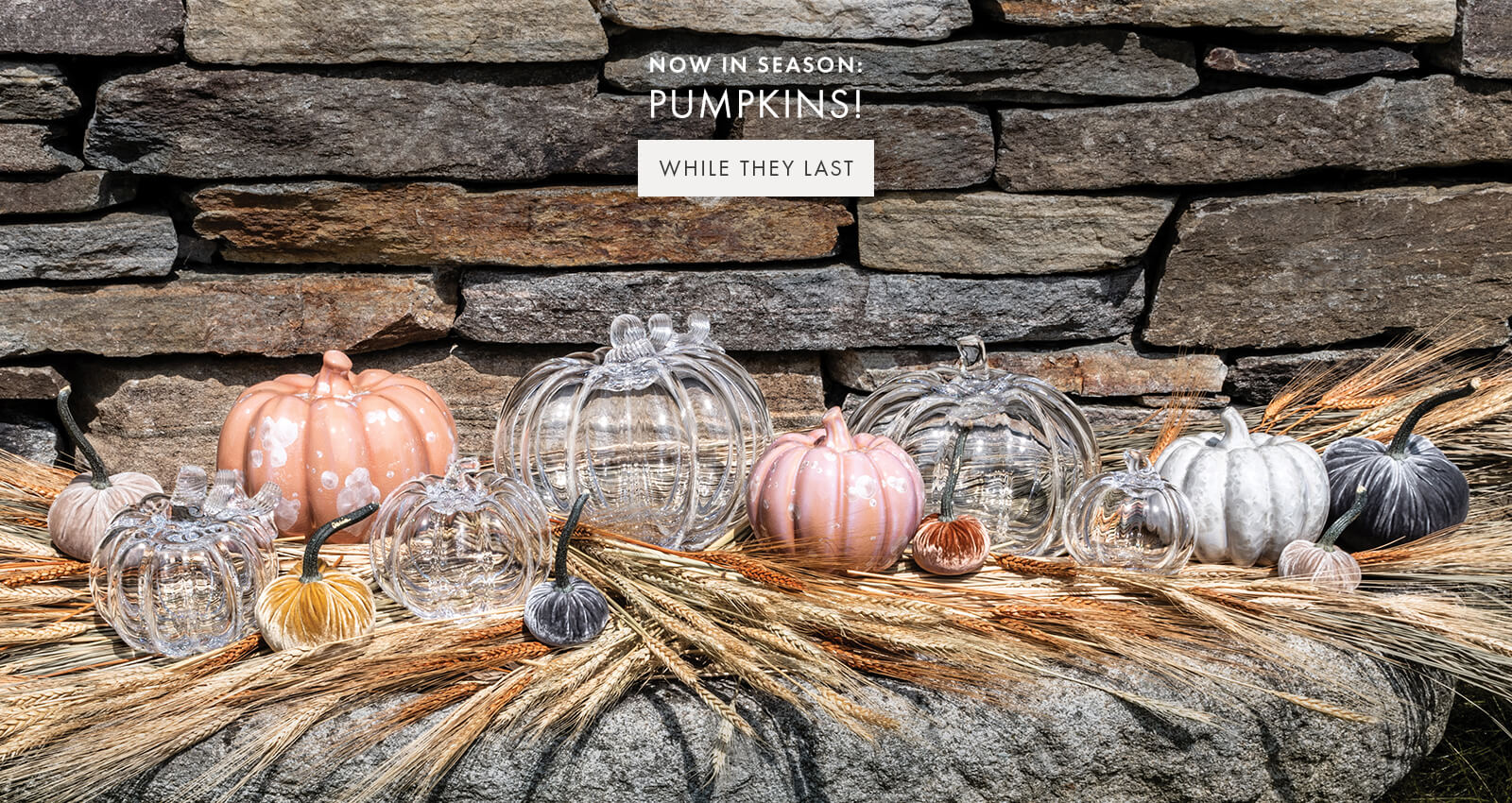 NOW IN SEASON: PUMPKINS! — WHILE THEY LAST >
