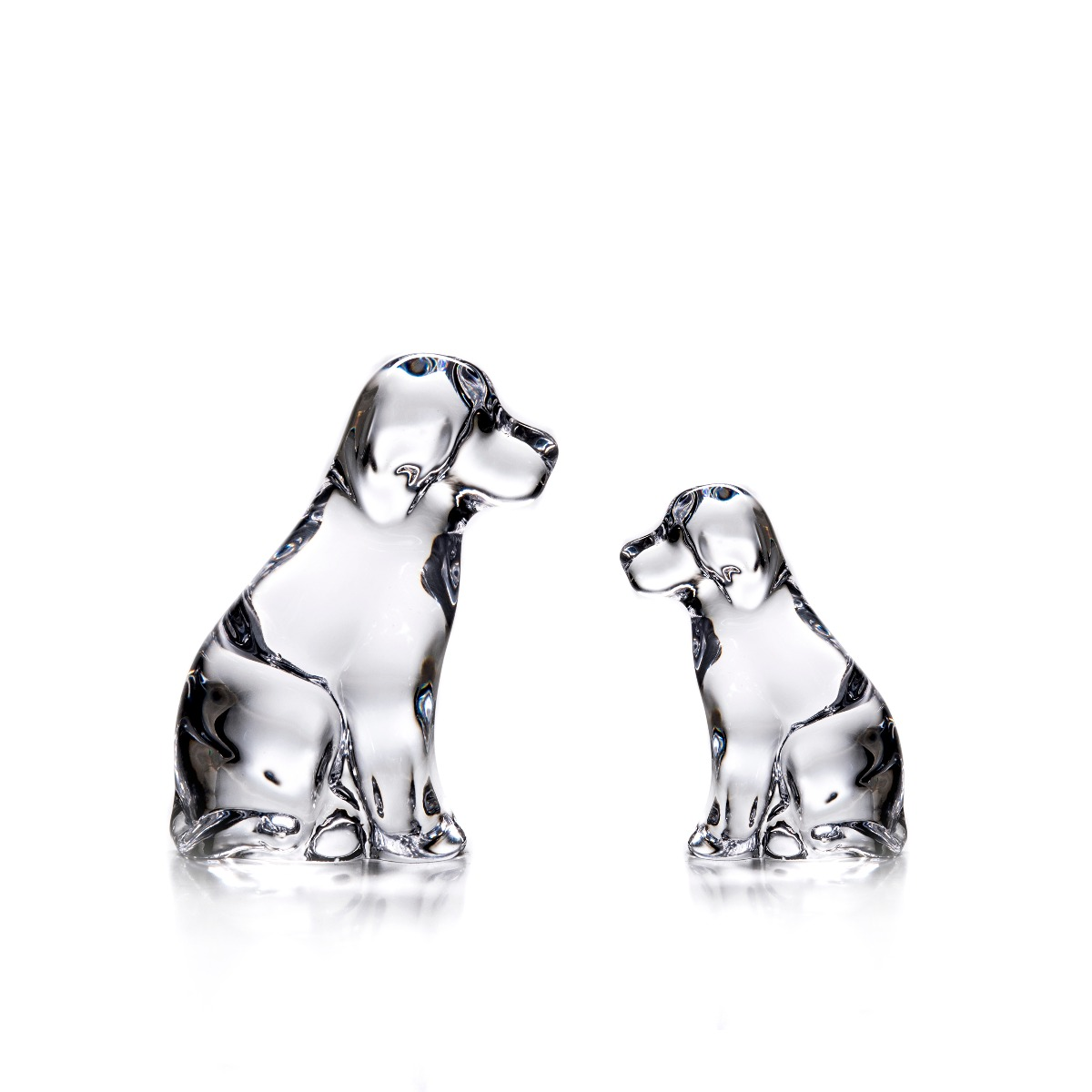 Glass Dogs — Rabbit