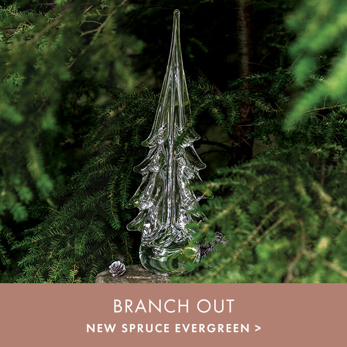 BRANCH OUT > NEW SPRUCE EVERGREEN